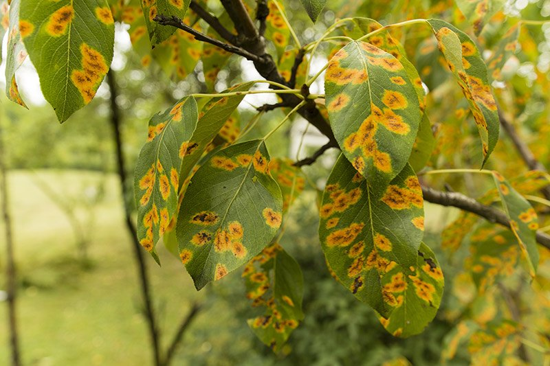 leaves on tree with orange and yellow spots on them