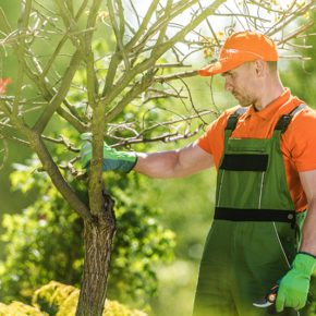 professional male tree care expert taking a look at a tree in a yard