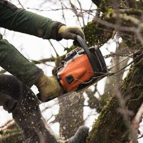 a close up view of a person using a chainsaw to cut branches off a large oak tree