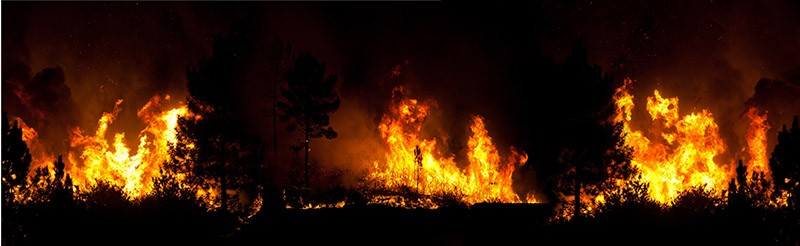 wildfire burning trees and grassland at night