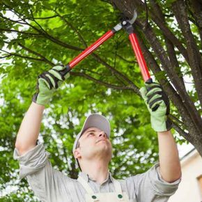 Professional gardener pruning a tree next to a house
