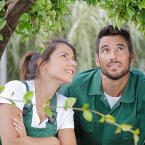 a man and women inspecting a tree up close for common pests