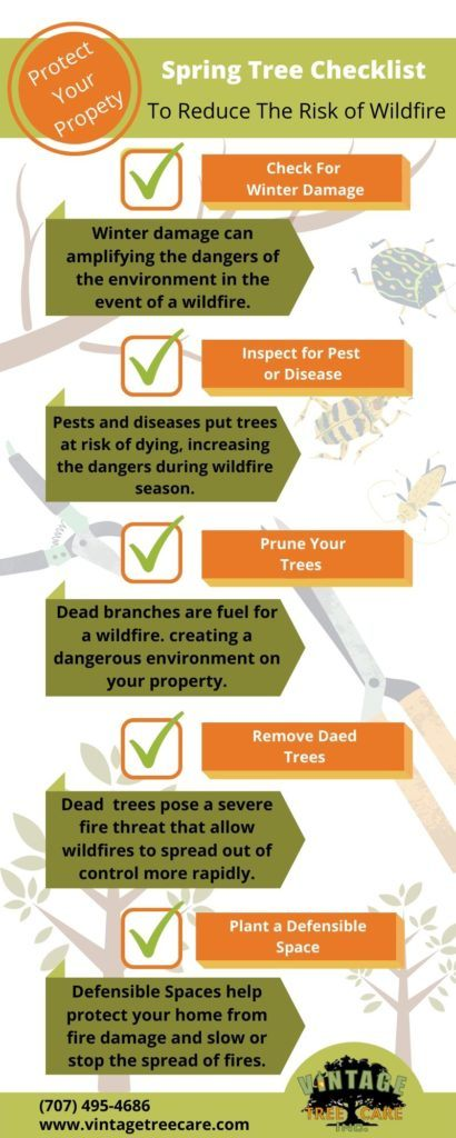 infographic of spring tree check list to reduce wildfire risk