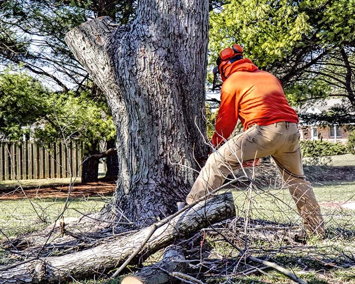 certified arborist removing dead tree from front yard of home