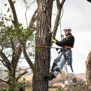 certified arborists trimming trees