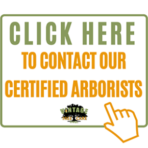CLICK HERE TO CONTACT OUR CERTIFIED ARBORISTS